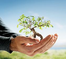 Hayleys Sustainability